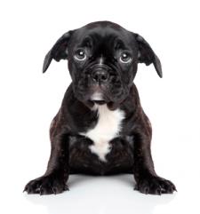 Вялая собака: чем питание может помочь?